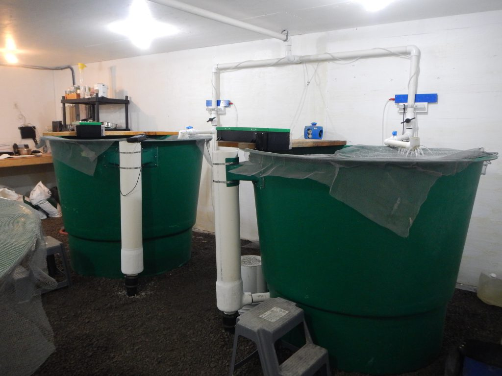 Mount Polley hatchery rearing tanks. [summer 2018]